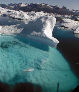 pies-icebergs